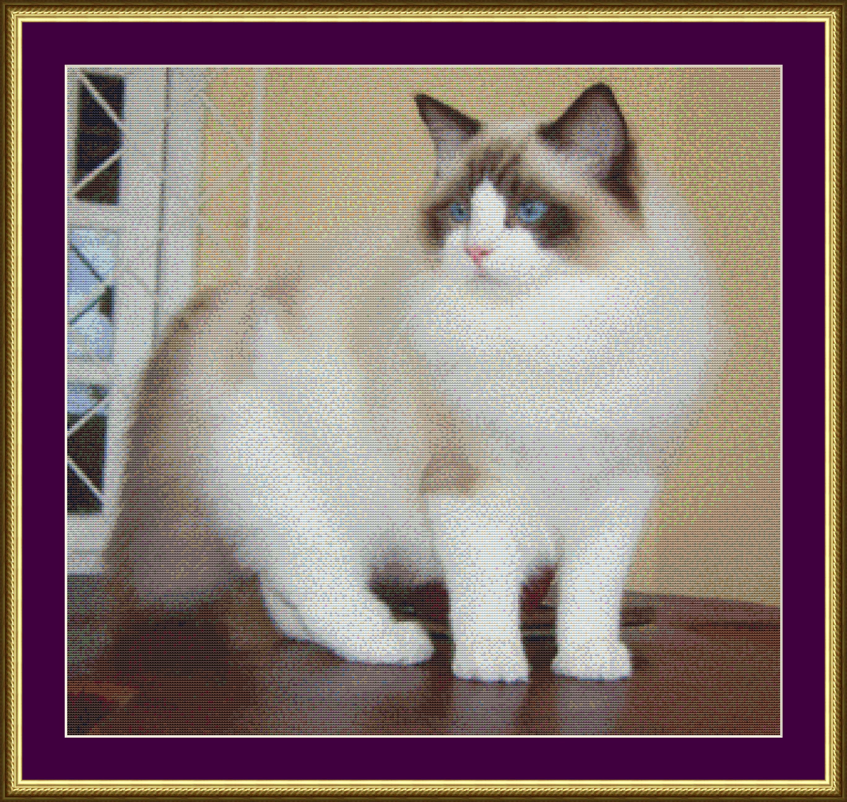 Фотографии Рэгдолл порода кошек, Фото 2.